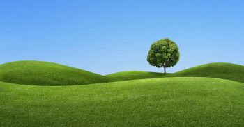 The Grass is Always Greener - Keeping Your Grass Greener